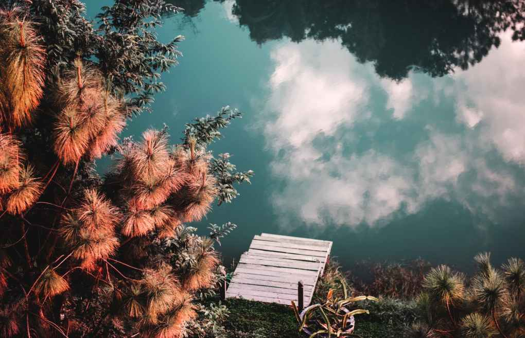 top view of trees beside the lake