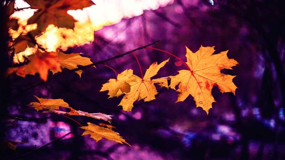 autumn autumn leaf autumn leaves beautiful